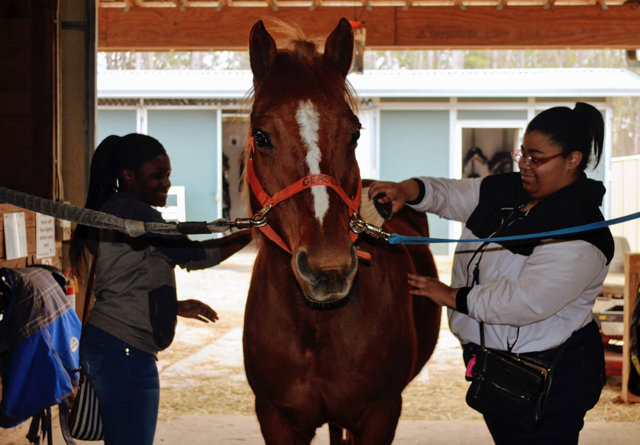 Students combing a horse in a stable